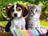 Como fortalecer la inmunidad de nuestras mascotas eninvierno